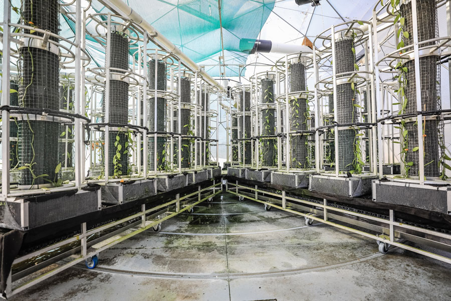 The Vanilla Dome uses automated energy technology to grow the world's second most valuable spice